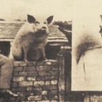 pig-wall